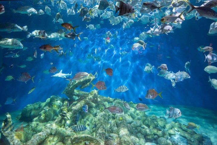 North Carolina Aquarium