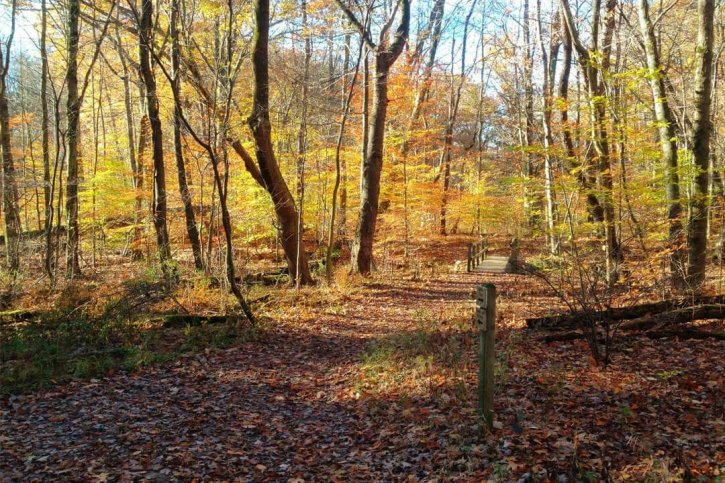 Quail Hollow Park Nature for All Trail