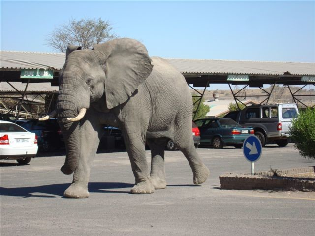 elephant parking lot
