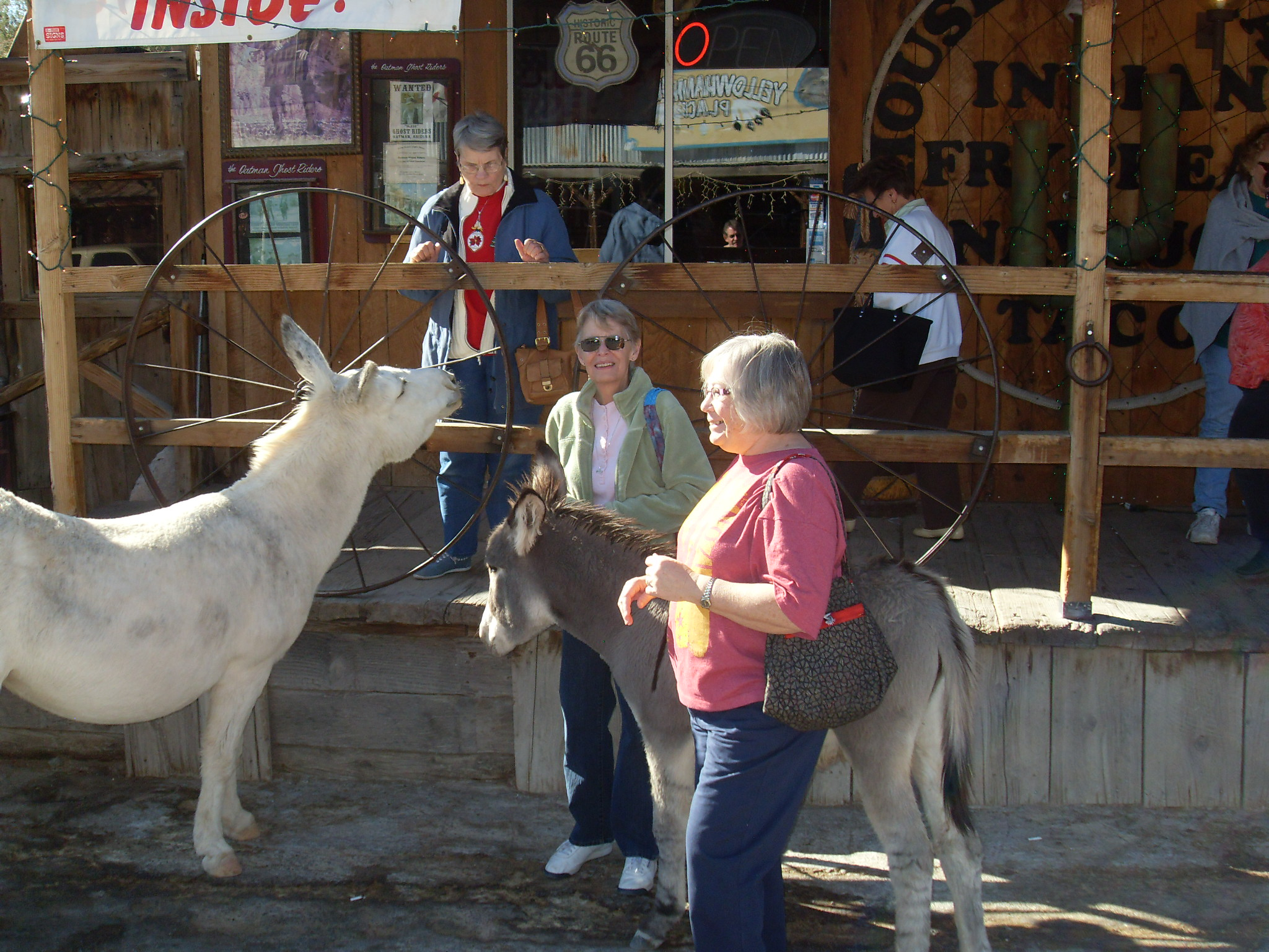 The burros attract a lot of attention in Oatman.