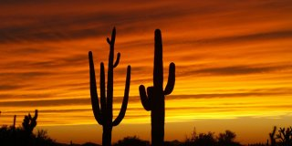 6 Reasons Why The World Loves Arizona