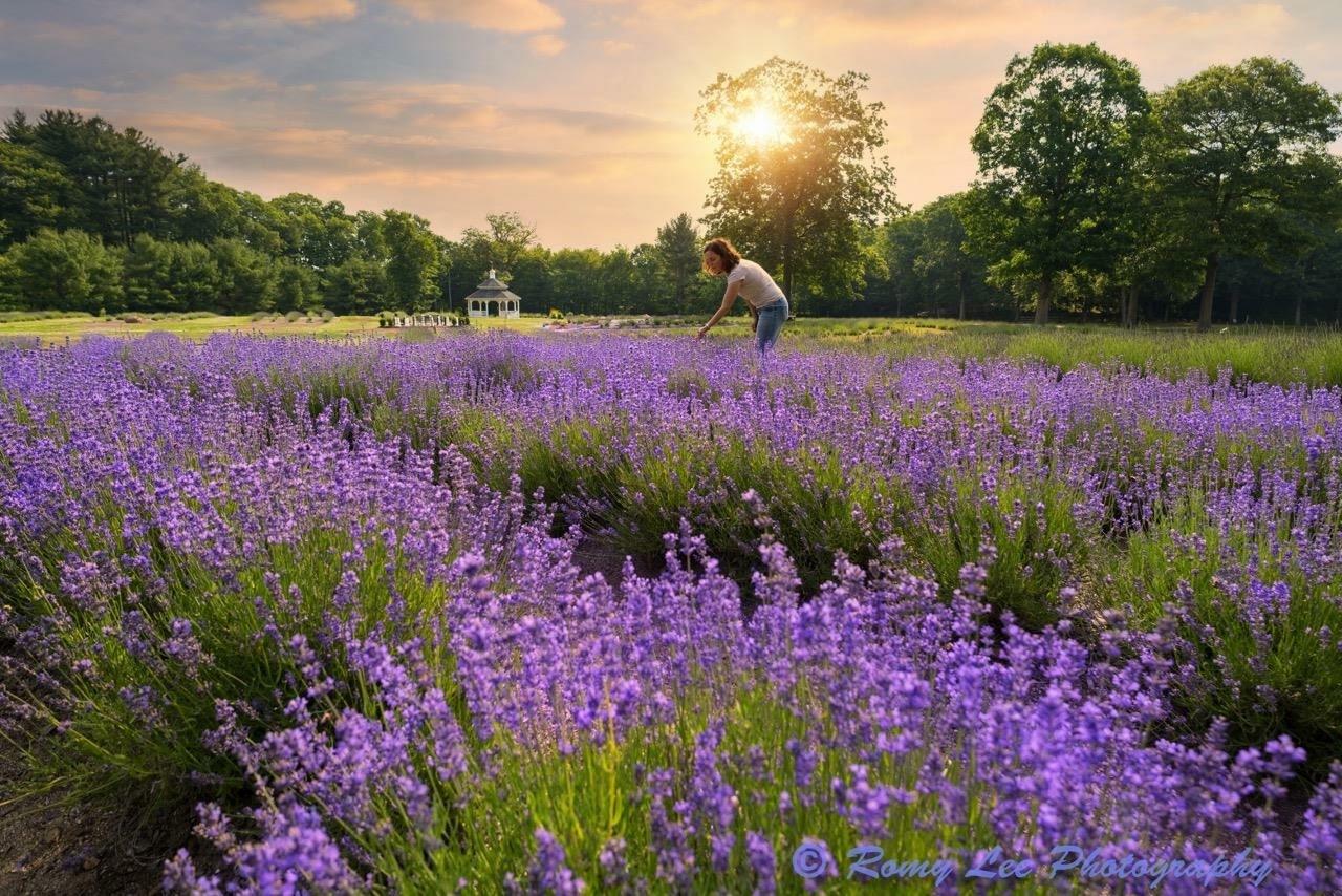 Lavender Pond Farm, Connecticut