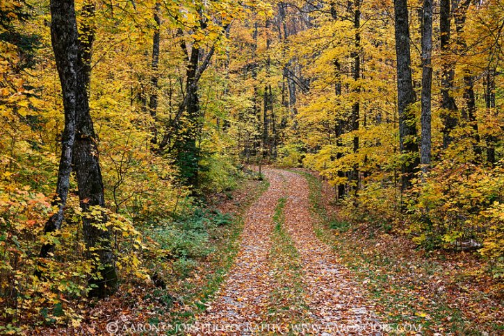 Chequamegon-Nicolet National Forest Wisconsin