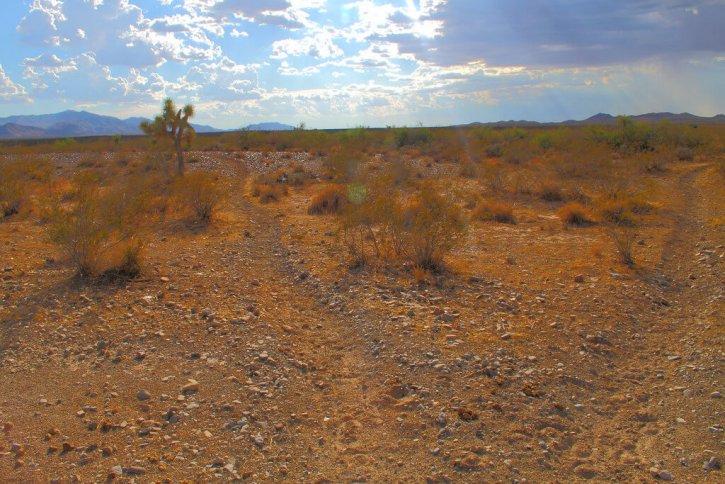 Mojave Desert Arizona