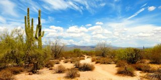 Visiting These 3 Deserts in Arizona Will Bring Out the Adventurer in You