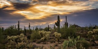 5 Things You Need to Know About the Sonoran Desert in Arizona