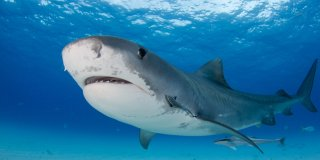7 of the Most Dangerous Animals Found in Hawaii