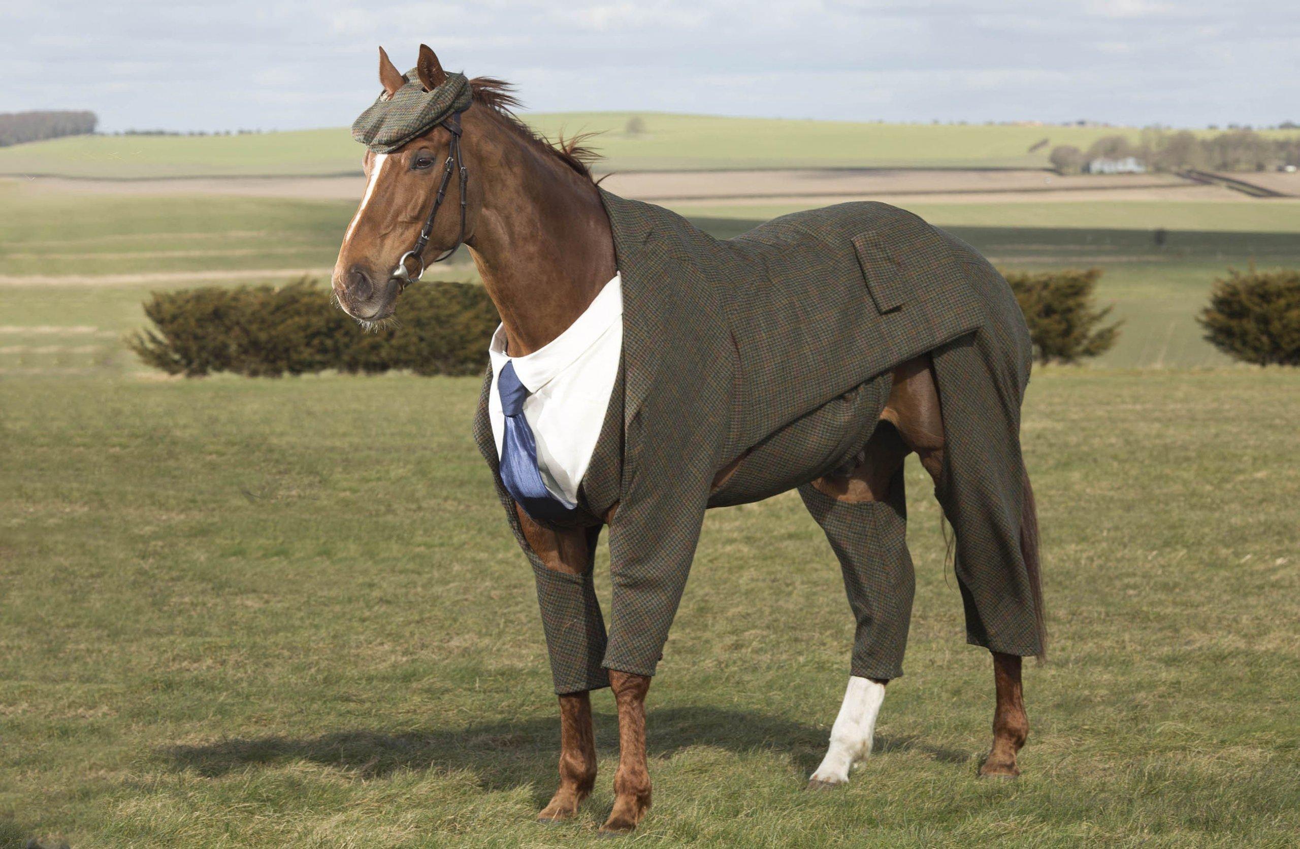 horse wearing pants