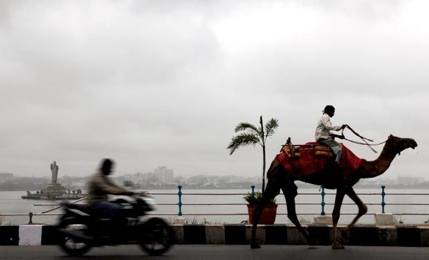 riding a camel on the highway
