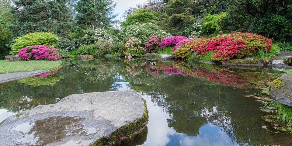Kubota Garden Pond in Seattle, Washington.