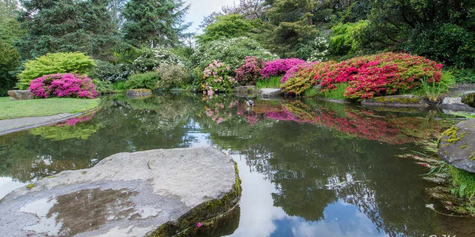 Kubota Garden Pond in Seattle, Washington.