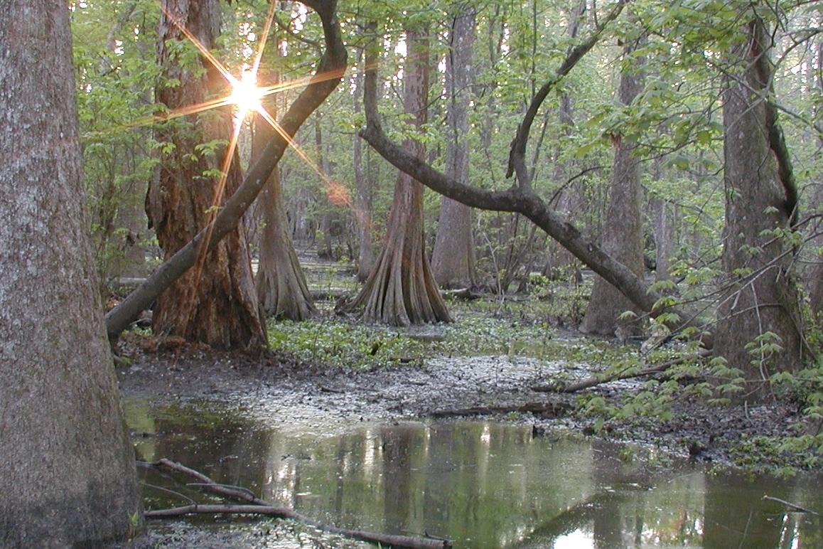 Bluebonnet Swamp Nature Center, Baton Rouge, LA