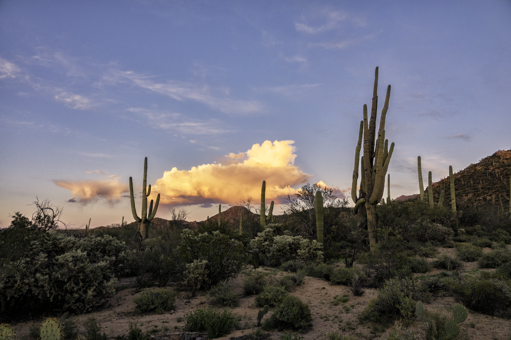 Saguaro National Park is one of the national parks in Arizona still open during the coronavirus.
