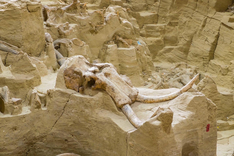 Mammoth Site, South Dakota
