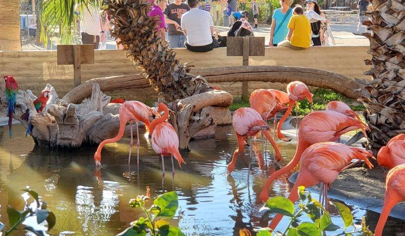 Dillons KC BBQ Flamingos AZ