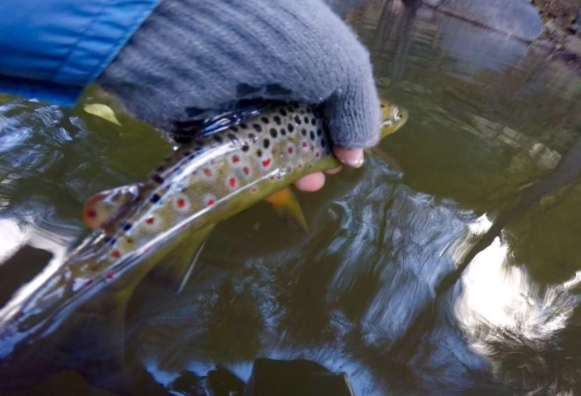 Fishing Arizona Sedona