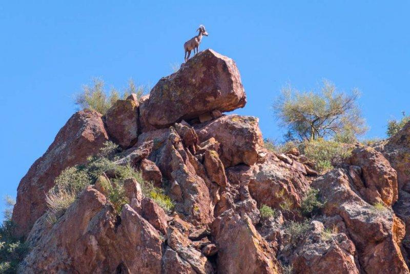Sunset Wine Cruise Wildlife Arizona