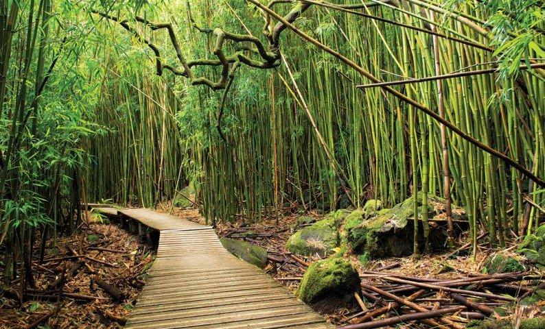 pipiwai trail-oheo gulch hike trail maui