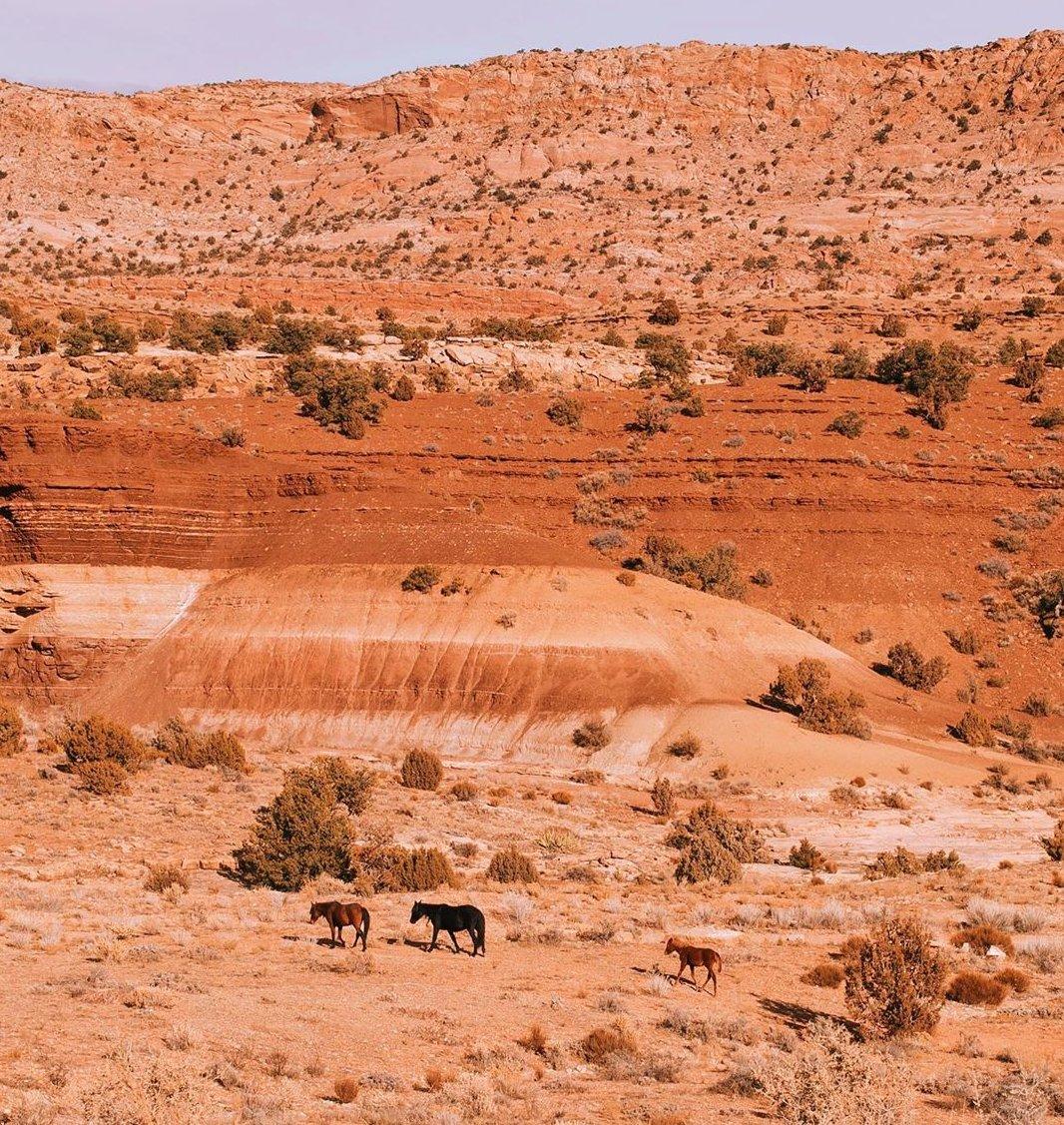 Bitter Springs Arizona Landscapes
