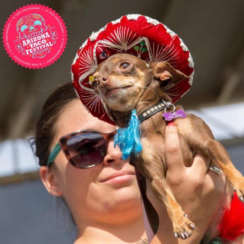 Chihuahua Contest Arizona Fun Festival