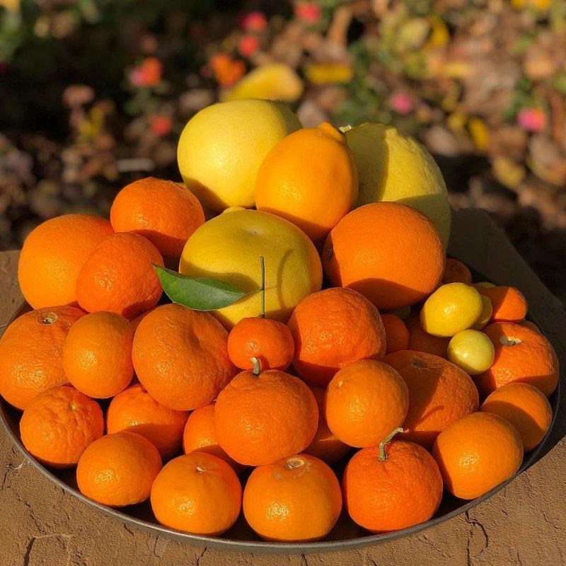 Justice Brothers U-Pick Oranges