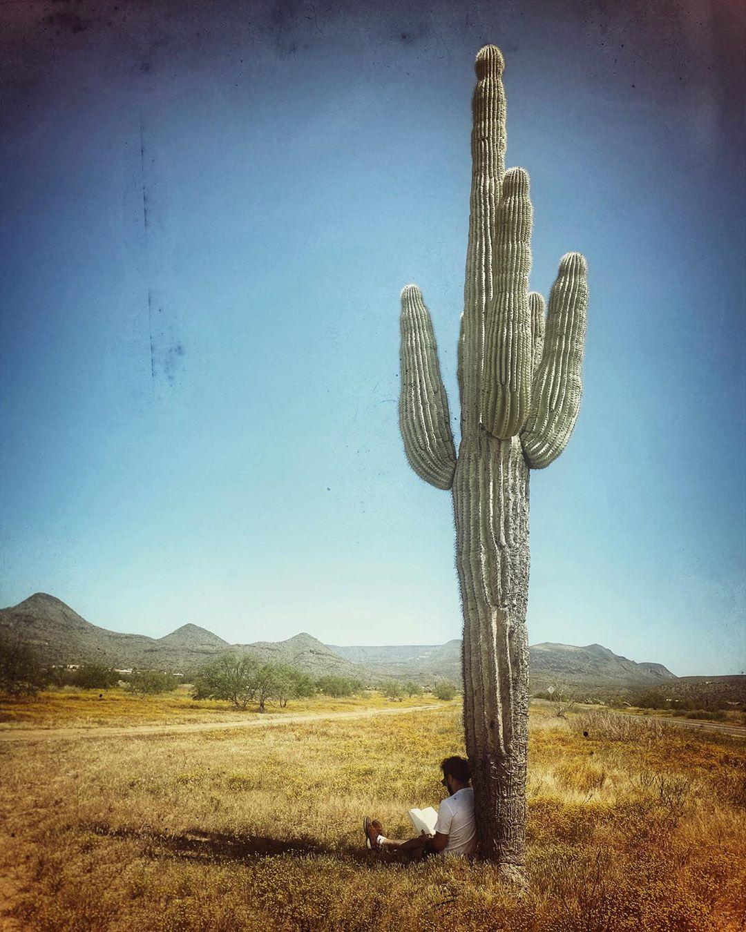 Big Cactus AZ