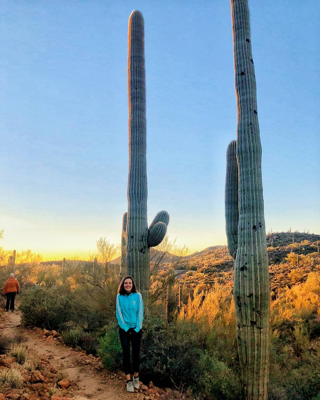 Cactus Tall AZ