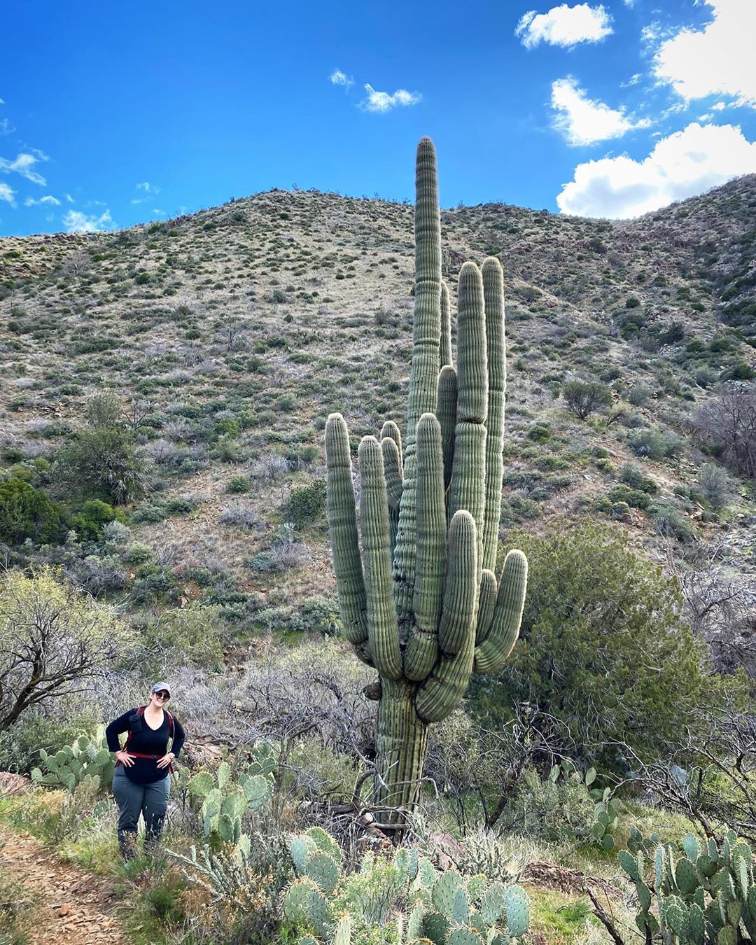 Cactus in Tonto National Forest arizona