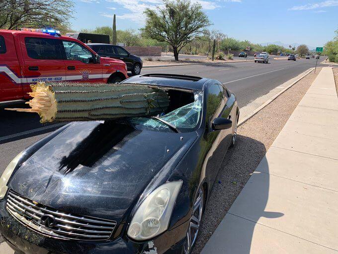 Car vs Cactus Accident Arizona
