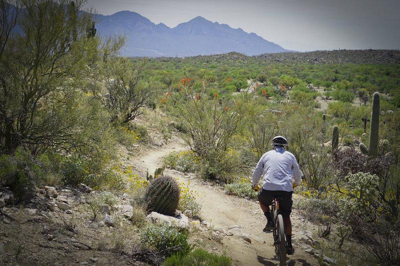 Honeybee Canyon Loop arizona