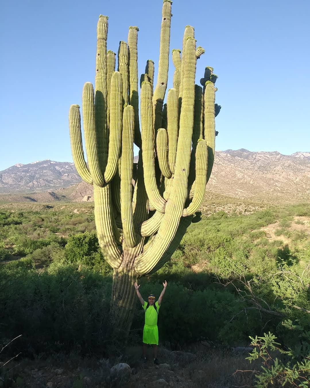 Huge Cactus Catalina State Park Tucson AZ