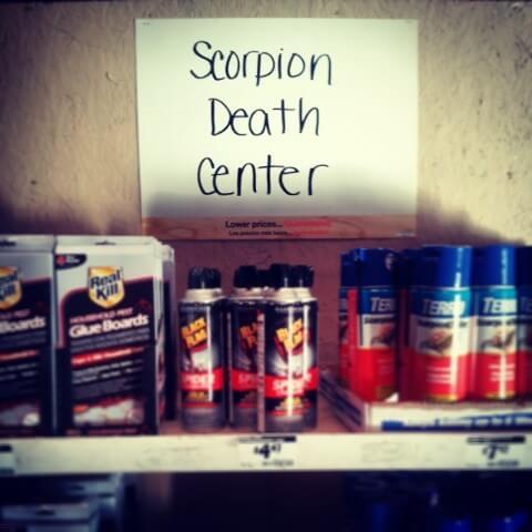 Scorpion Death Center Home Depot Arizona