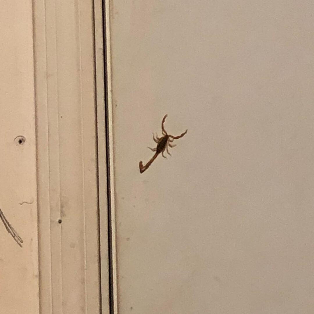 Scorpions Arizona Home