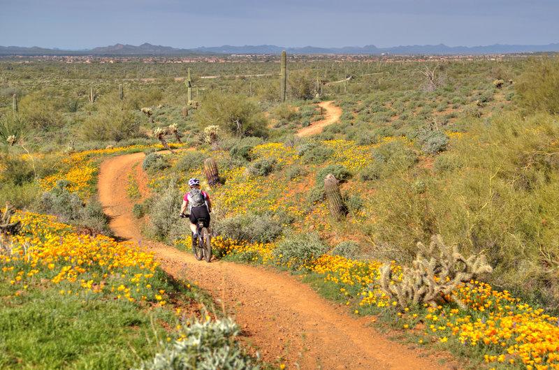 Sonoran Desert Loop az
