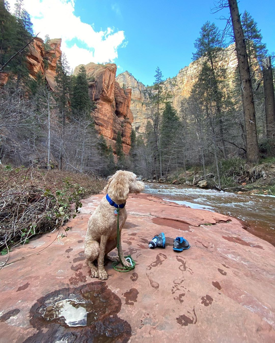dog friendly hikes trails arizona