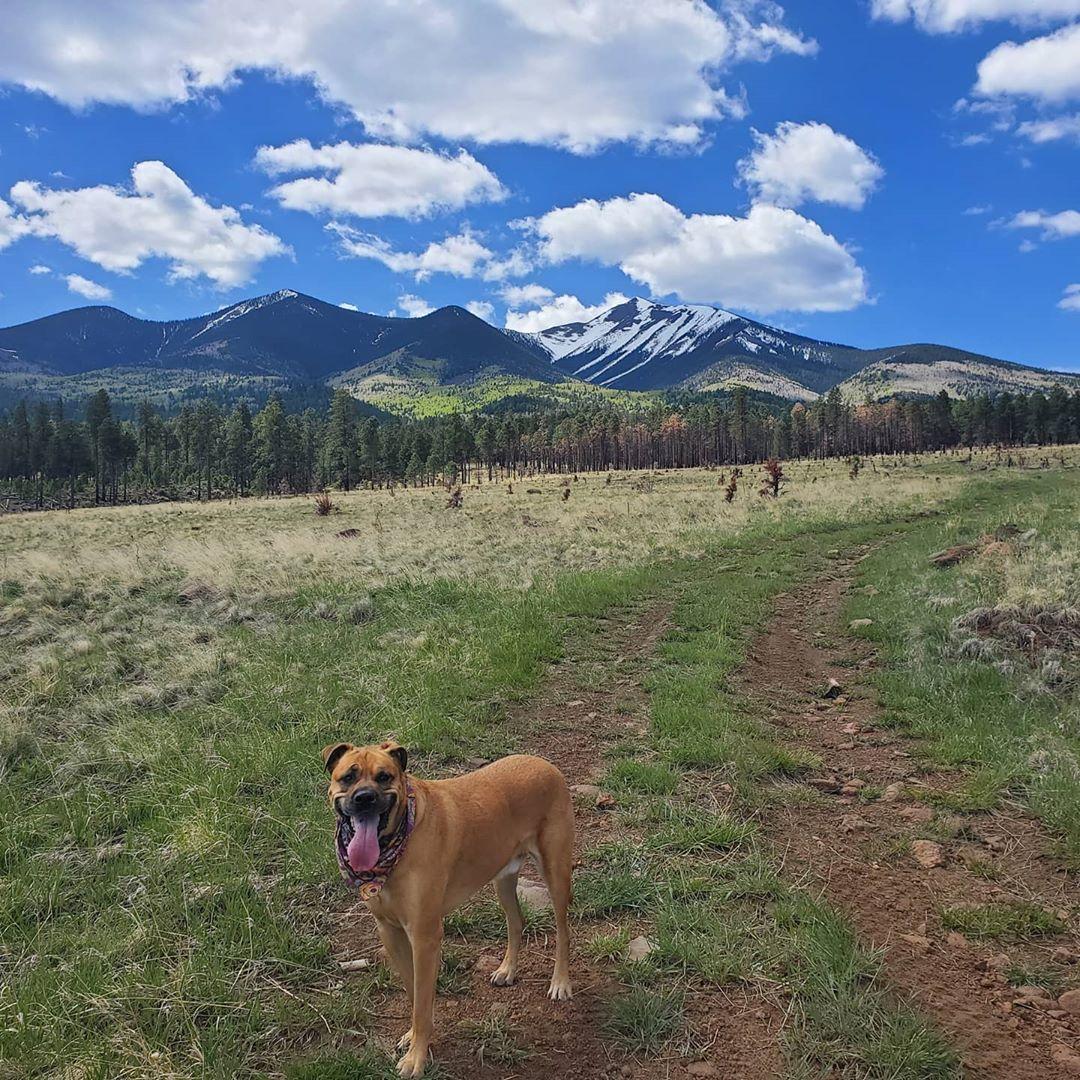 dog friendly campground az beautiful