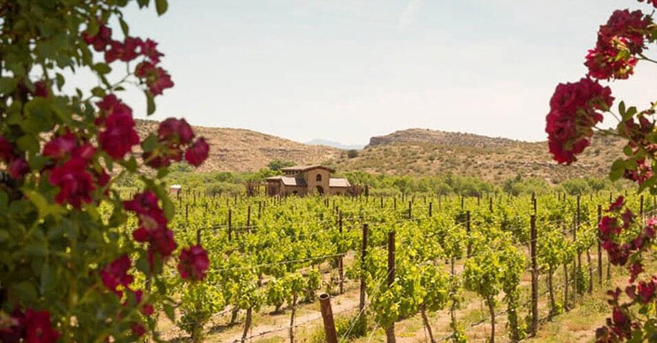Alcantara Vineyards cottonwood charming towns in arizona