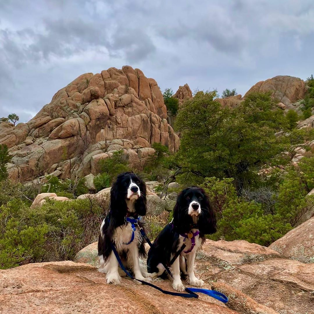 Constellation Trail Dog Hikers az