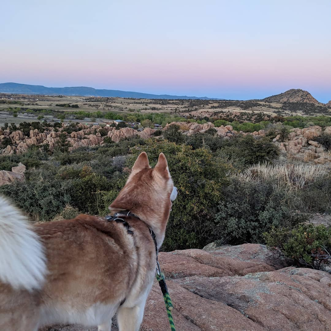 Dog Hikes in Arizona