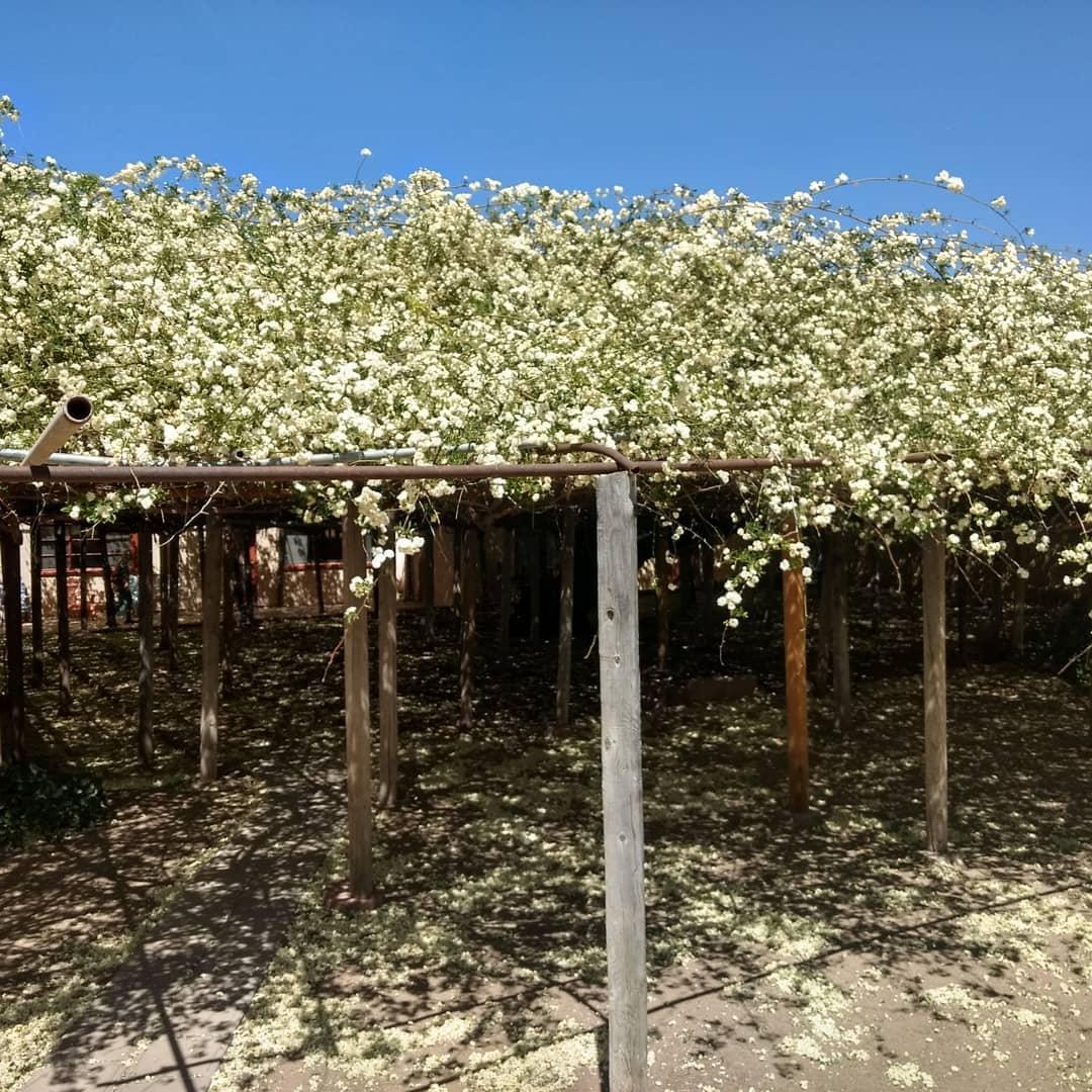 Rose Tree Bloom Tombstone