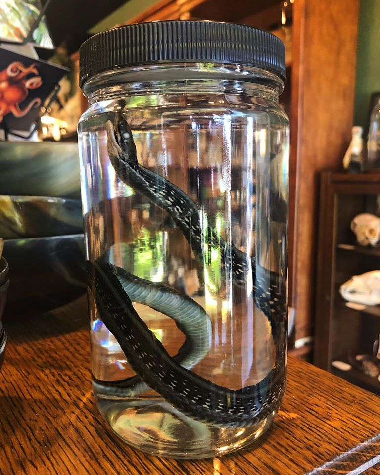 Wet Specimen oddities shop in arizona
