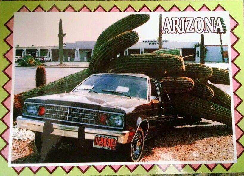 Arizona Cactus funny