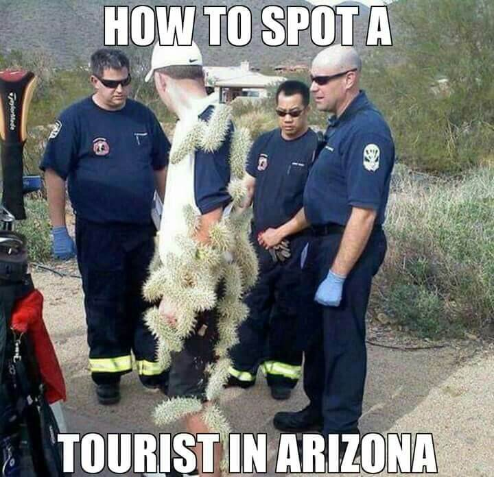 Arizona Cactus funny meanwhile in arizona memes