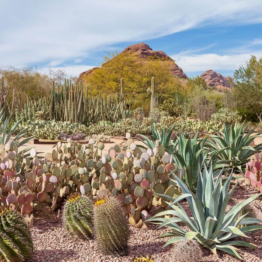 Desert Botanical Garden arizona best things to do in phoenix