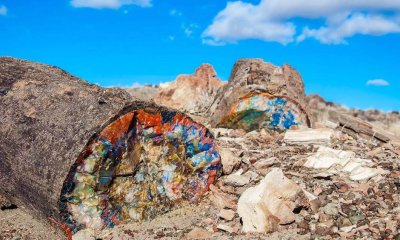 Petrified Forest rainbow trees az