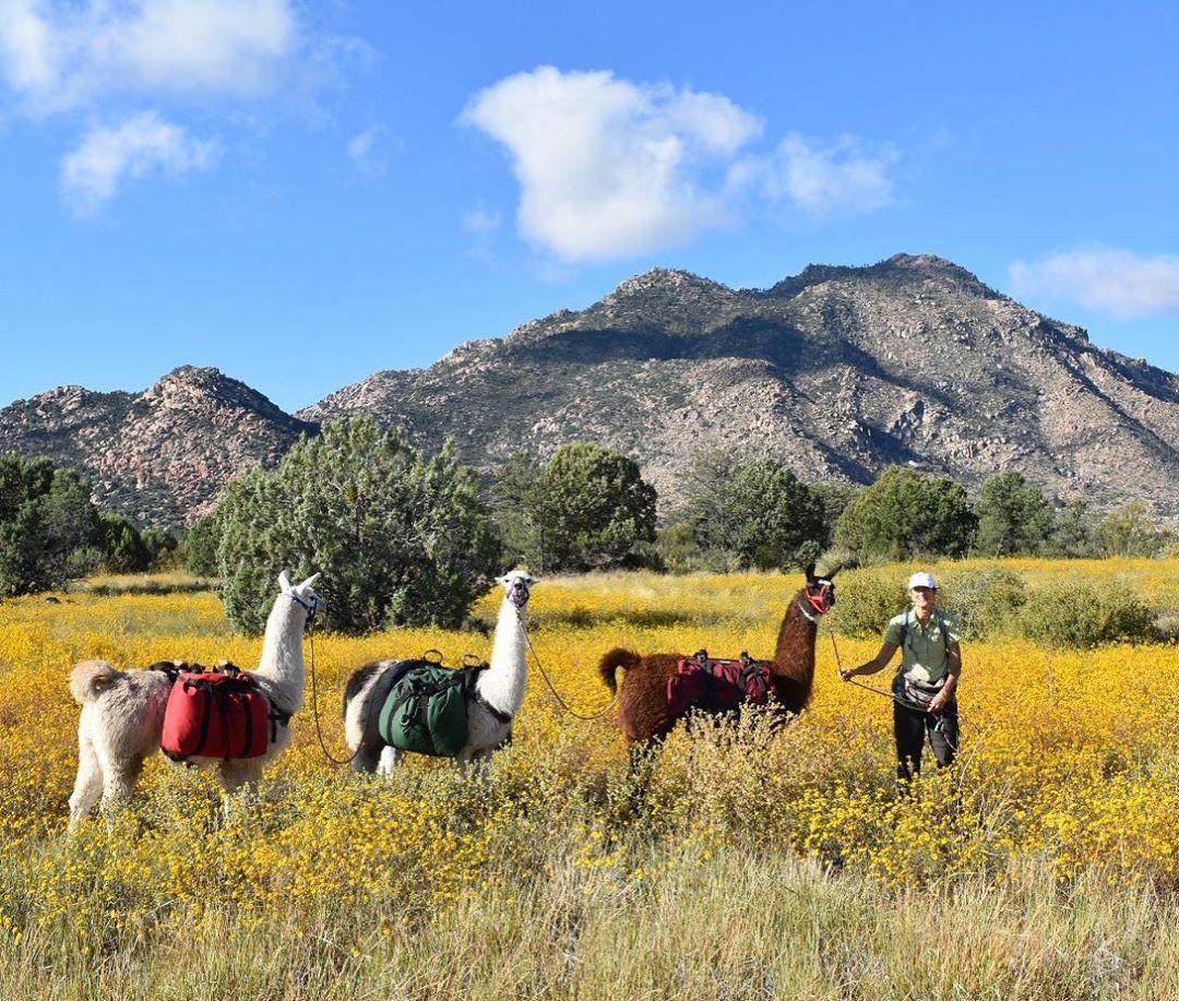 hiking with llamas az tour