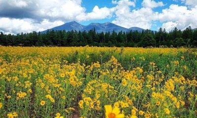 Fort Valley Flower Field az