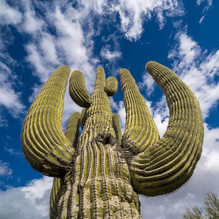 Saguaro National Park large things in arizona