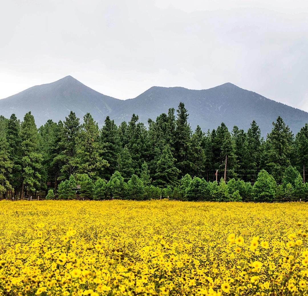Schultz Pass Flagstaff arizona