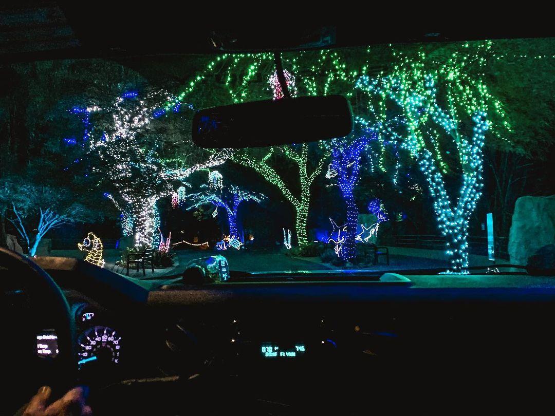 Drive Through Christmas Lights phoenix zoo